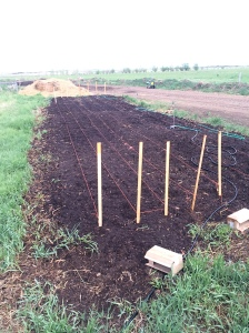 Potatoes planted.